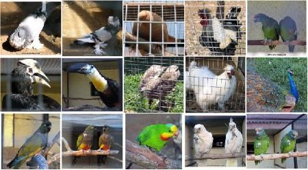 В Калужской области ООО «Парк птиц» получило лицензию на содержание и использование животных в культурно-зрелищных целях