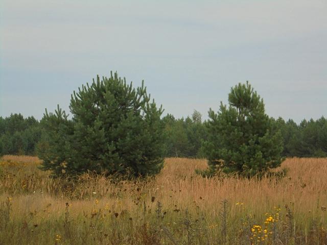 В Брянской области собственнице зарастающих в Выгоничском районе земель придется заплатить штраф