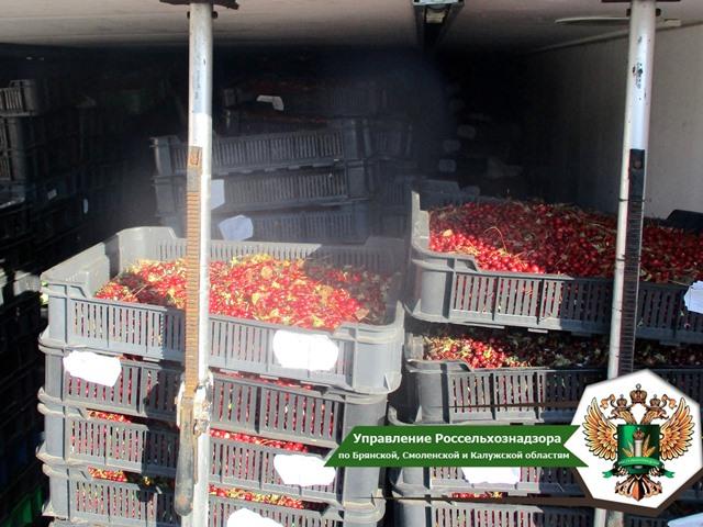 В Смоленской области Управлением Россельхознадзора запрещен ввоз с территории Республики Беларусь 16 тонн клюквы без сопроводительных документов