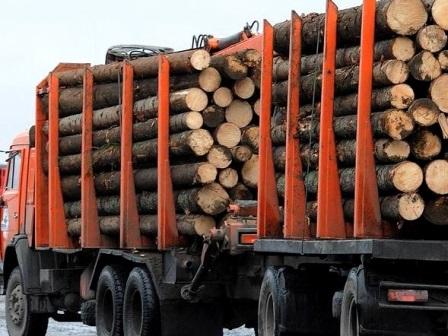 Управлением Россельхознадзора продолжается работа по пресечению нелегальных перевозок леса и лесопродукции из карантинных зон Смоленской области