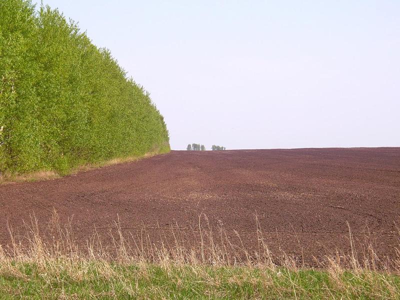 По предписанию Управления Россельхознадзора в Гагаринском районе в сельскохозяйственный оборот введены неиспользуемые ранее сельхозземли